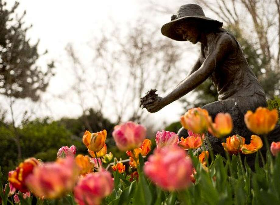 HEALDSBURGStop to enjoy the tulips — and the wineries — in Healdsburg. (Drive time: 1.5 hours) Photo: Alvin Jordana, Special To The Chronicle