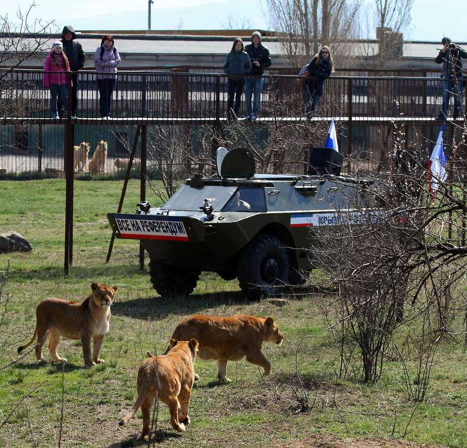 They don't know when to stop: Now Russian armor is invading Crimea's zoos. (Simferopol, 