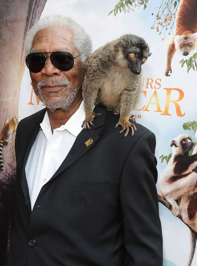 "It's a mad, mad, mad, Madagascar world:Morgan Freeman and a co-star arrive for the premiere of Warner Bros. and IMAX Entertainment's ""Island Of Lemurs: Madagascar"" at the California Science Center in Los Angeles. Photo: Angela Weiss, Getty Images"