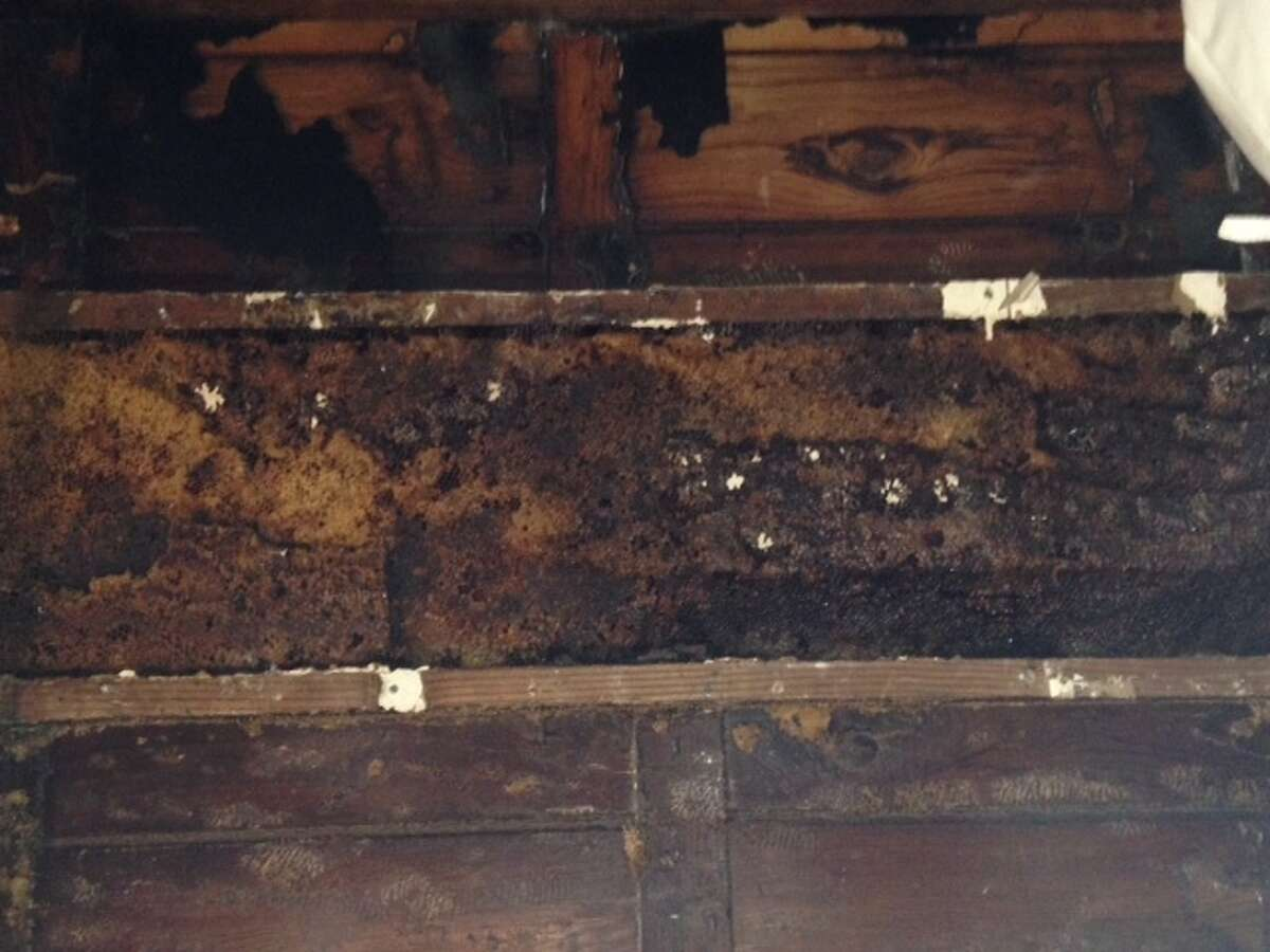 The bees had built a mammoth system of honeycomb behind dry wall at the house in Spring.