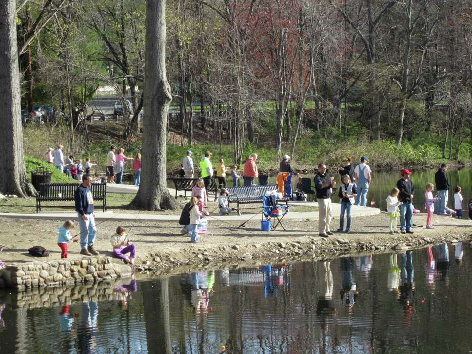 The annual fishing derby will take place Saturday, April 12, at New Canaan's Mill Pond, which will be secretly stocked with 370 pounds of rainbow trout. Photo: Contributed Photo, Contributed / New Canaan News Contributed