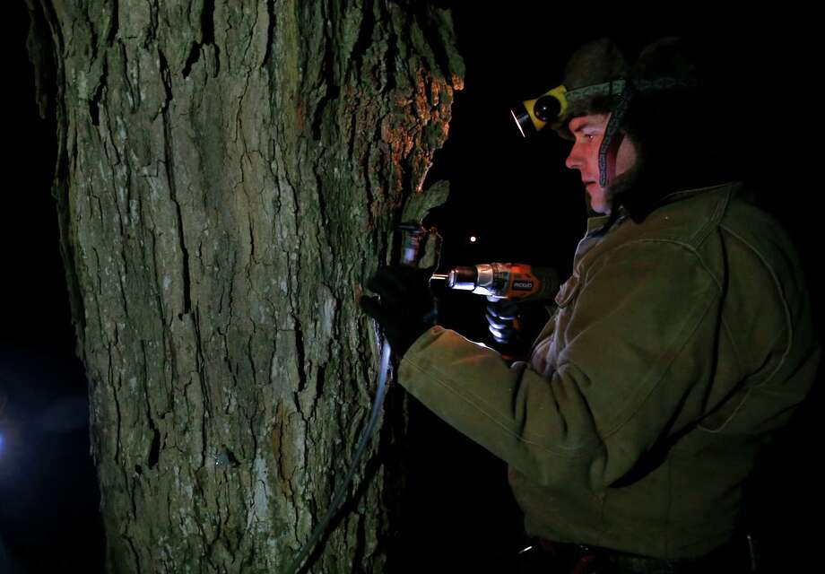In this March 9, 2014 photo, Turtle Lane Maple farmer Paul Boulanger taps a maple tree by headlamp Sunday evening in North Andover, Mass. Maple syrup season is finally under way in Massachusetts after getting off to a slow start because of unusually cold weather. (AP Photo/Elise Amendola) ORG XMIT: MAEA103 Photo: Elise Amendola, AP / AP