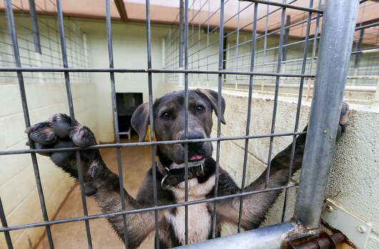 Owner Surrenders Of Pets Increase Shelter Overcrowding