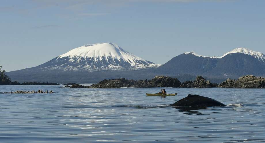A busy day for nature on the Sitka: A pair of kayakers paddle between a humpback whale and a 