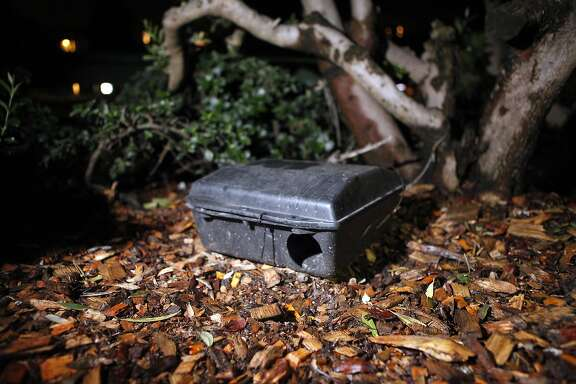A rat trap is seen under a bush at Washington Square Park in San Francisco, CA, Wednesday April 2, 2014.   John Murnin has recently begun seeing hordes of rats in the early morning hours at Washington Square Park where he waits for his regular bus to the Marina District.