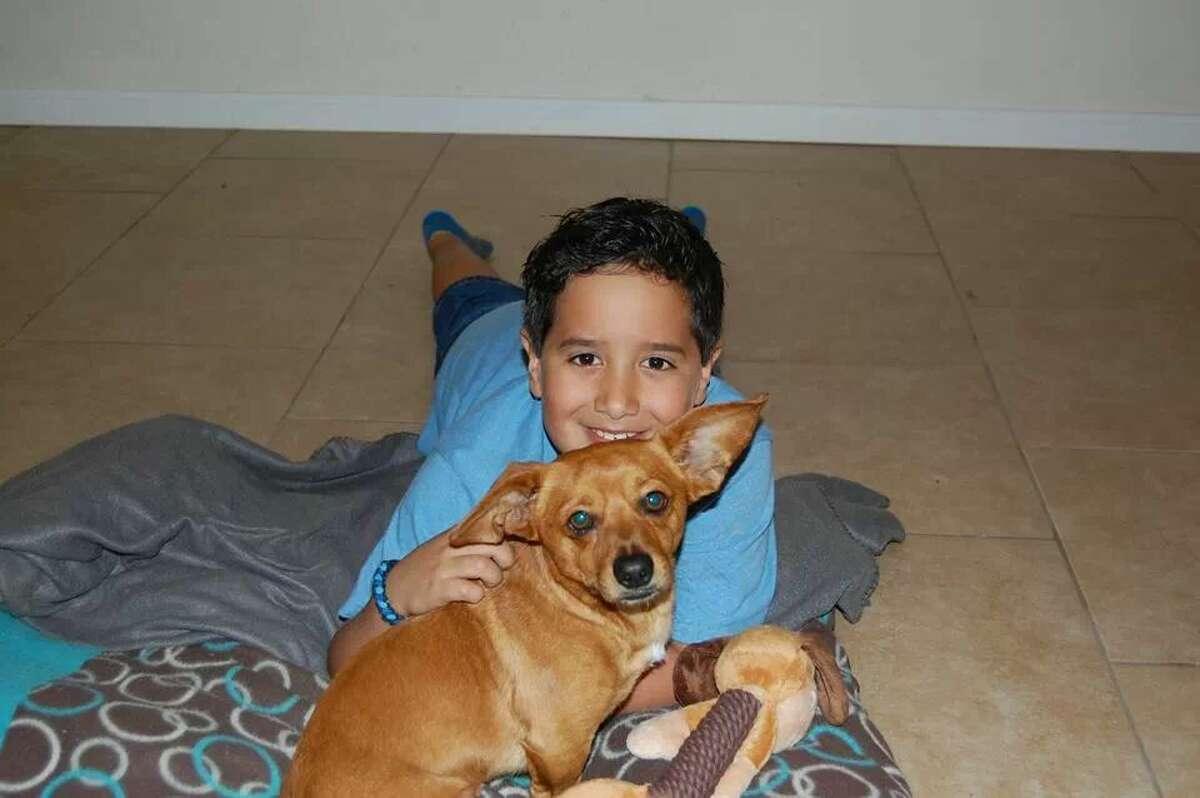 "Corbin, the wayward chihuahua/dachshund mix, is reunited in Killeen with 8-year-old Michael Saiz. ""It's really his dog,"" says dad Mike Saiz. Photo: Mike Saiz"