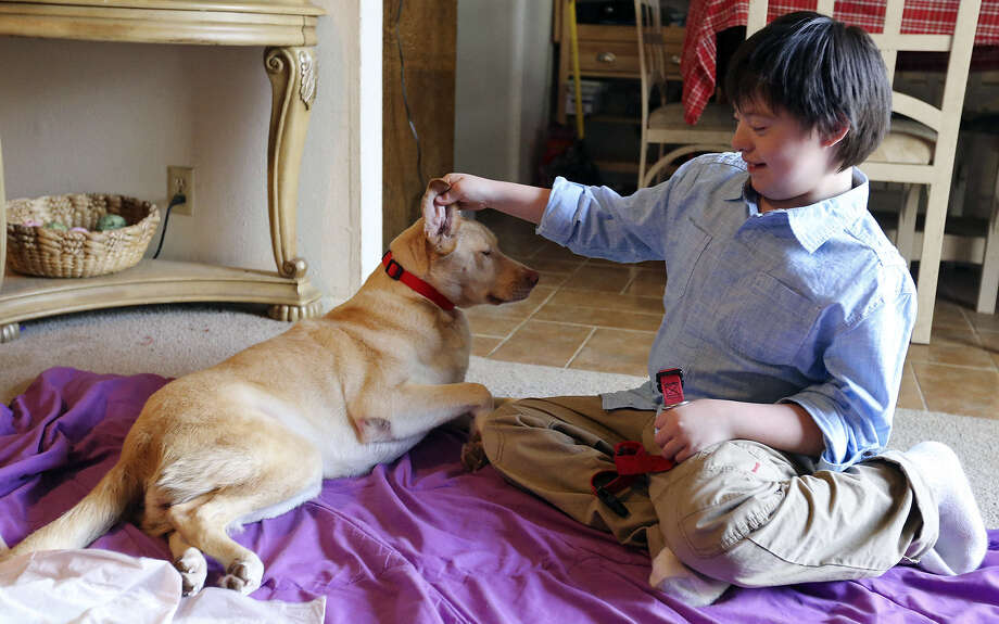 Both boy and dog now at home, Adam Vasquez rubs an appreciative Angel's ear. Before Angel, he rejected dogs. Photo: Edward A. Ornelas, San Antonio Express-News / © 2014 San Antonio Express-News