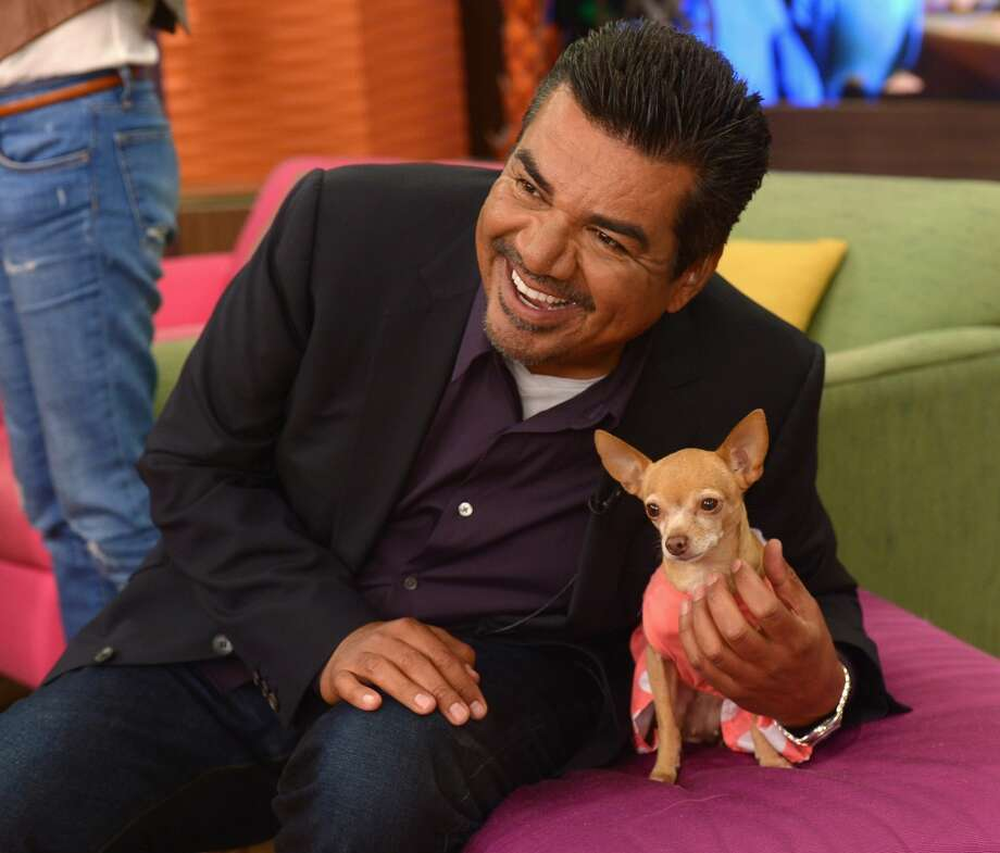 "... all three ""Beverly Hills Chihuahua"" movies ... Photo: Gustavo Caballero, Getty Images"