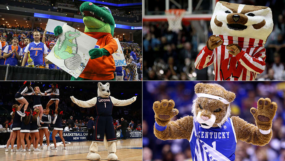 The Gator Chomp and Bucky Badger are headed to North Texas, along with Jonathan the Husky and Coach Cal.College basketball's biggest event at AT&T Stadium in Arlington is finally set after Connecticut and Kentucky punched their tickets with regional victories Sunday. Express-News college basketball writer Tim Griffin looks at some of the notable trends heading into Saturday's semifinal games: Photo: Photos By Orlando Sentinel/MCT And Getty Images