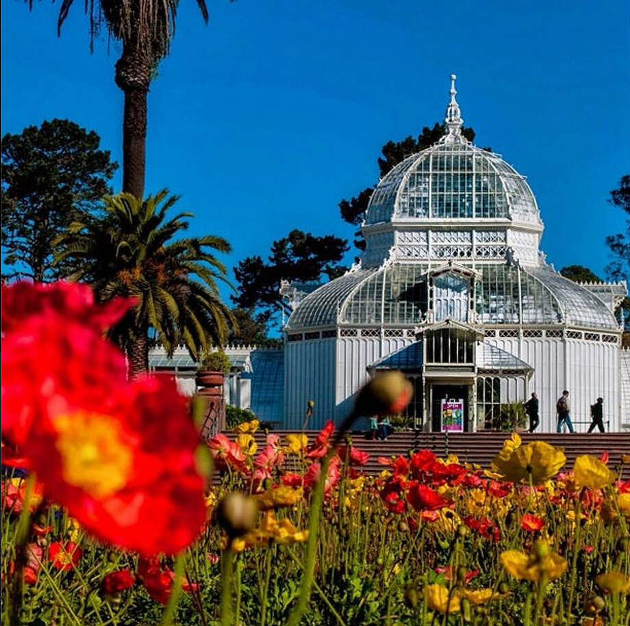 You know spring's here when the flowers are out in full bloom. And what better place to see the flowers than at the Conservatory of Flowers? Kevin11, or @instakevin11 took this photo of the famous greenhouse and the poppy field right outside its entrance.