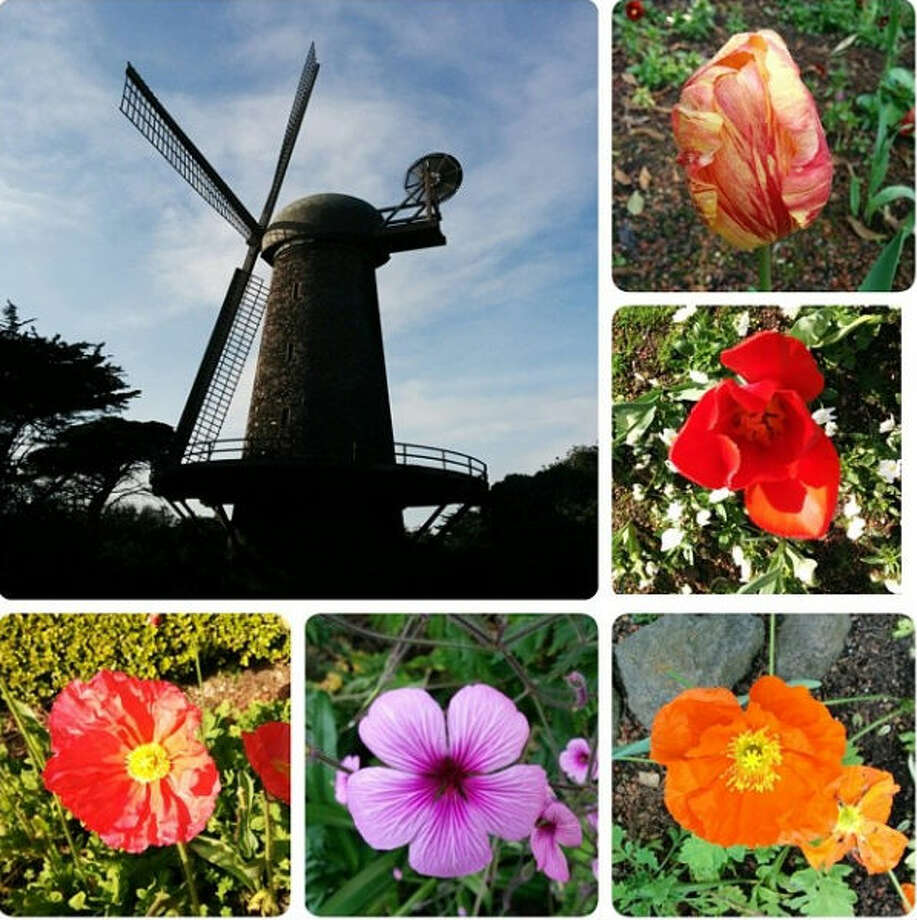 And Susie wasn't the only inspired by the windmill. Bruce R-C, or @breyeschow, put together this collage of the windmill and flowers, including tulips.