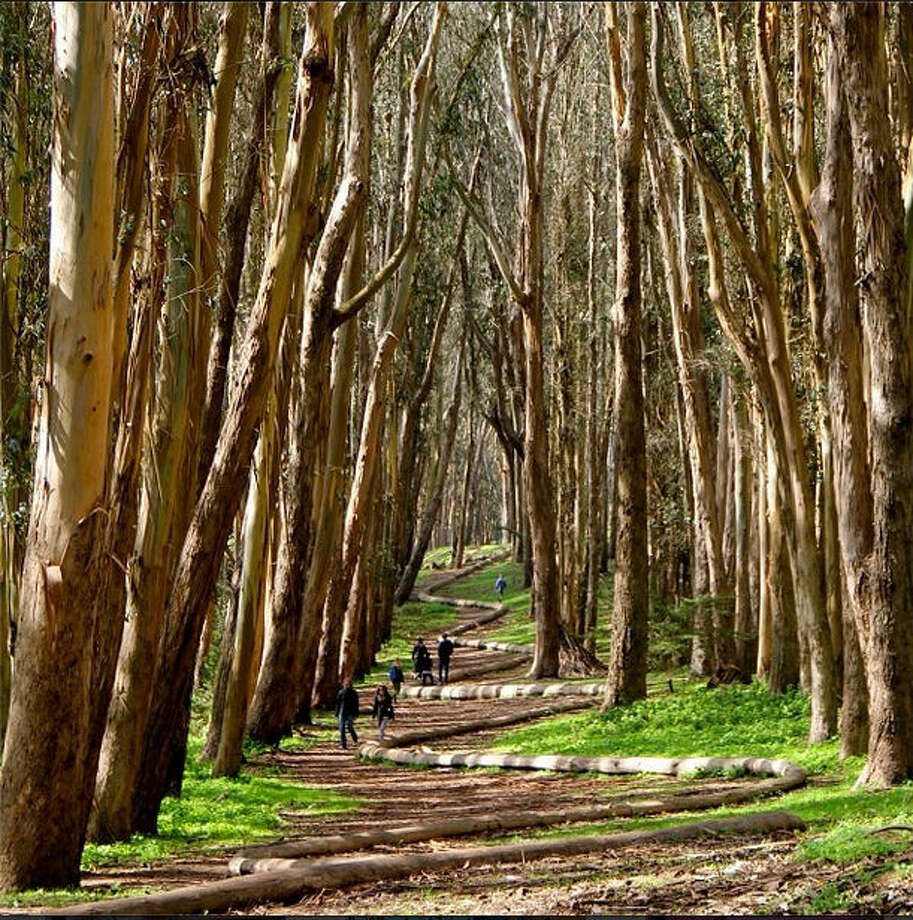 The Woodline in the Presidio makes a lovely trail for San Franciscans like Kina Z., or @thesamekz, to enjoy of nice days.