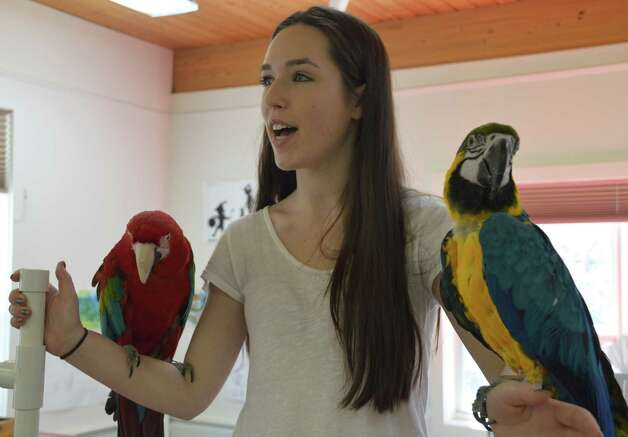 Carly Brodsky, a volunteer with Wilton Parrot Rescue, and friends Sangria, left, a green-winged macaw, and Rex, a blue and gold macaw at