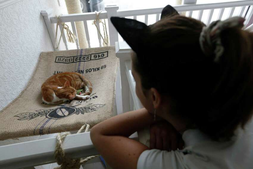 A visitor looks at a cat in the newly opened Lady Dinah's Cat Emporium in London, Friday, April 4, 2014. Feline company is exactly what one of London's newest cafes is offering - and stressed-out city-dwellers are lapping it up.