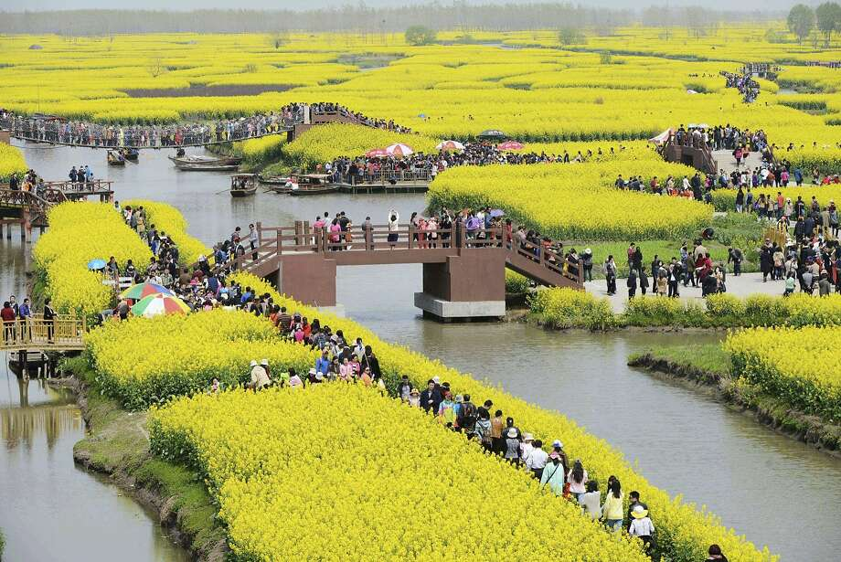 Tourism in full bloom:Chinese tourists visit the Qianduo rapeseed fields in Taizhou, Jiangsu 
