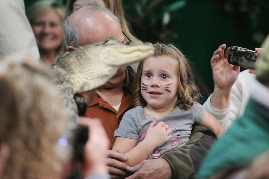 Scaredy cat:Animal handler and biologist Nelson 