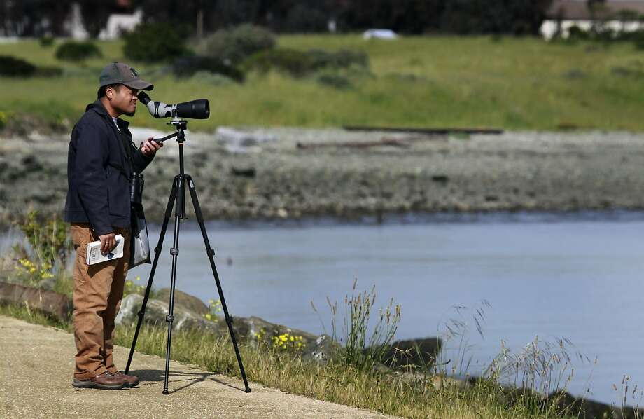 Birdwatcher Carlo Arreglo observes shorebird activity at Heron's Head Park in San Francisco. Photo: Paul Chinn, The Chronicle