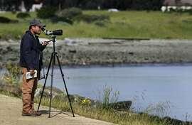 Birdwatcher Carlo Arreglo observes shorebird activity at Heron's Head Park in San Francisco, Calif. on Thursday, April 3, 2014.