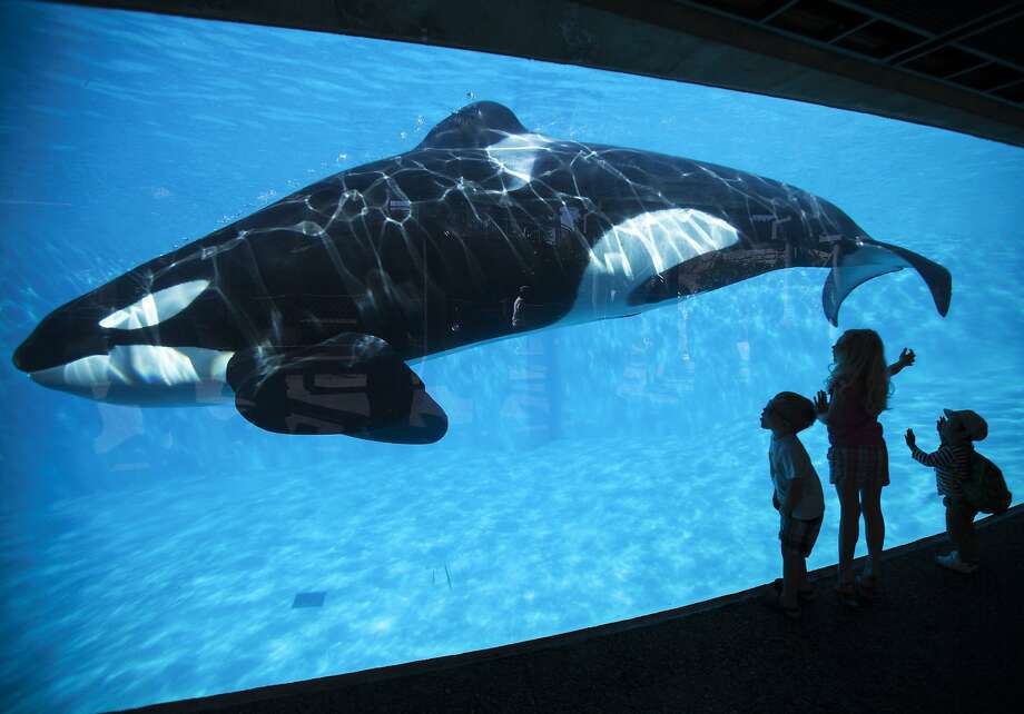 "SeaWorld has come under criticism since the documentary ""Blackfish"" suggested that captivity leads to violent behavior in killer whales, which led to the death of one of the park's trainers. Photo: Mike Blake, Reuters"