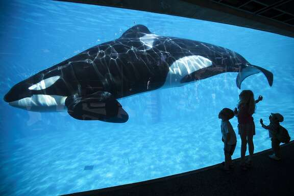 Young children get a close-up view of an Orca killer whale during a visit to the animal theme park SeaWorld in San Diego, California March 19, 2014   REUTERS/Mike Blake   (UNITED STATES - Tags: ANIMALS ENVIRONMENT SOCIETY TRAVEL)