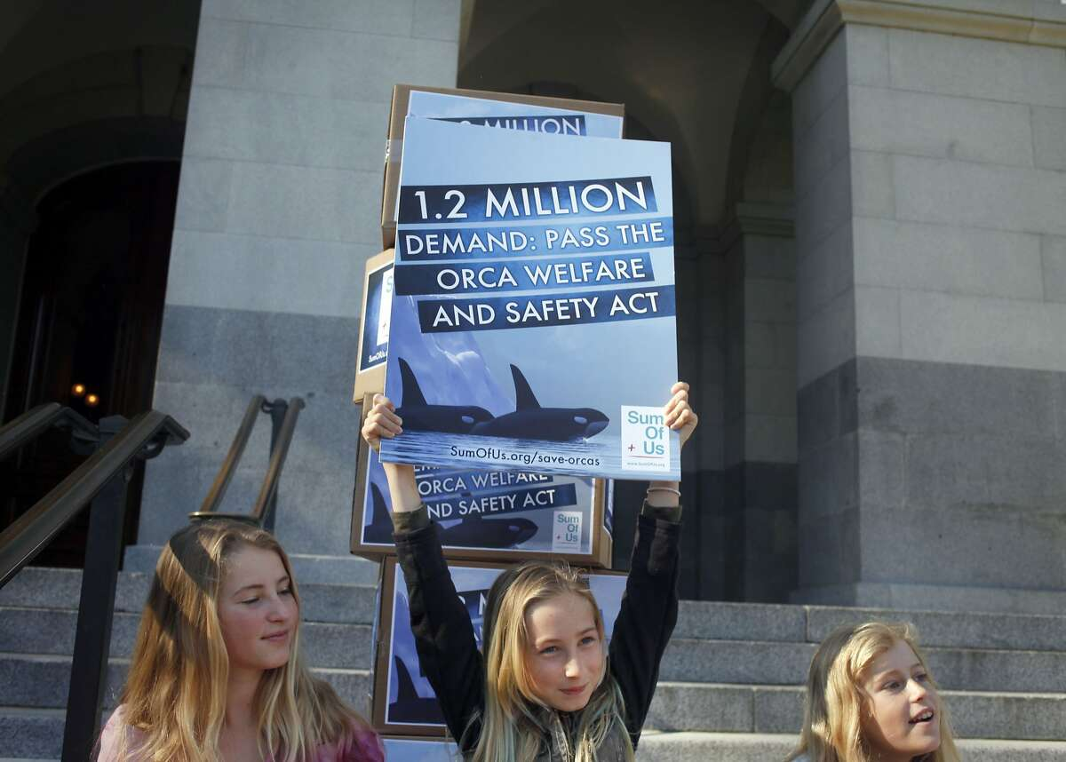Ava Kotler, left , sister Kirra Kotler and Lizzie Gordon hold signs supporting Bill AB 2140, on the steps of the State Capital, Monday April 7, 2014, in Sacramento, Calif. Kirra, 10 year old, of Malibu stopped her school from going on their field trip to Sea World because of the treatment of the orcas whales. The bill, which goes up for vote Tuesday, if passed will ensure the welfare of captive orcas and the safety of their trainers in the state of California.