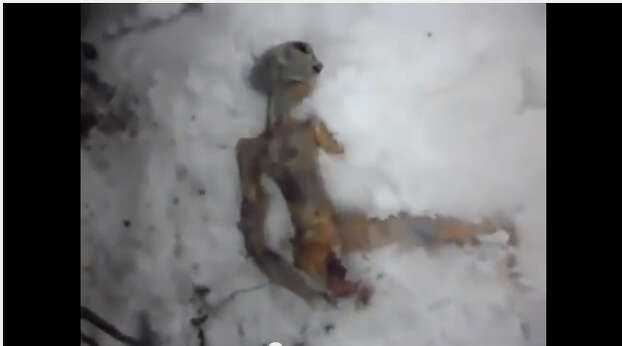 A Russian man filmed a video of a supposed dead alien body in the town of Kamensk. The video found massive success online. The chief editor of the local newspaper was scared that it might be the body of a child so he contacted the police to investigate. When the police found the creator of the video, he admitted that it was a hoax. The body was actually made of a chicken stuffed with bread. Photo: This is a screen grab from the video claiming to be of a dead alien found in Kamensk, Russia.  Turns out is was made from chicken parts and bread.