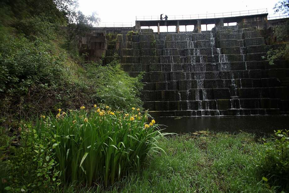 Stanford University's Searsville Dam, which irrigates campus lawns and the university golf course, is endangering San Francisquito Creek, a national group says. Photo: Liz Hafalia, The Chronicle