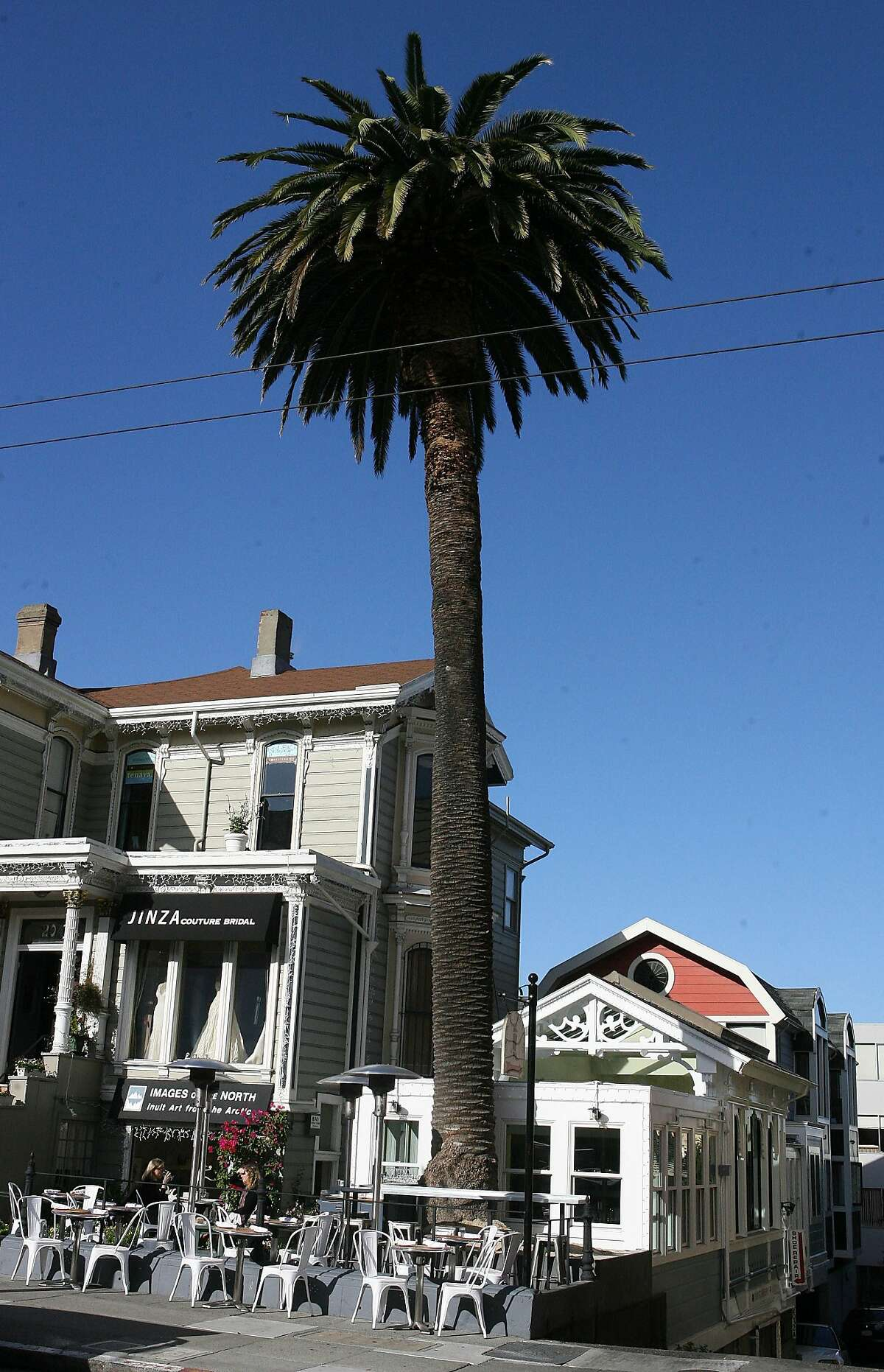 What's billed as the second oldest palm tree in the Bay Area is the namesake for the Palm House, a new Caribbean-themed restaurant going into the former Nettie's Crab Shack space on San Francisco's Union Street.