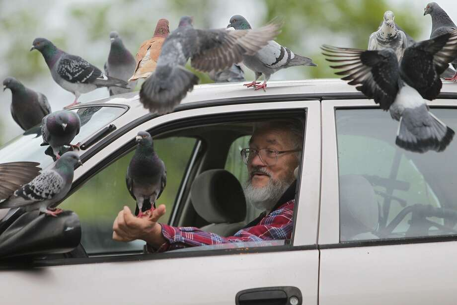 "Treats for tweets: Fans of Robert Shepherd, a frequent feeder of the feathered, gather for a handout in Redding, Calif. ""I get a bang 
