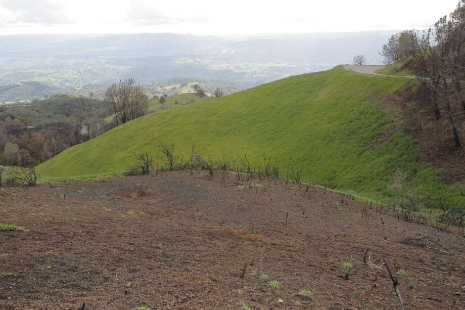 Along Summit Road at Mount Diablo, you can see areas that interface between burned areas from the Morgan Fire to untouched areas at peak spring colors Photo: Tom Stienstra