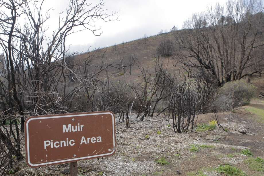 Muir Picnic Area along Summit Road en route to top of Mount Diablo was burned out in Morgan Fire, with a few glimpses of green and color in ground-level vegetation Photo: Tom Stienstra