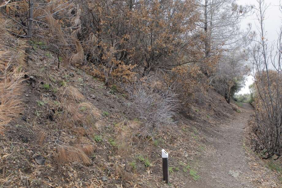 The Mary Bowerman Trail near summit is routed through a burn area Photo: Tom Stienstra
