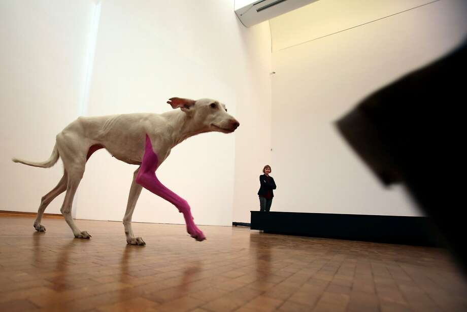 Please pet the art:As part of his installation at the Ludwig Museum in Cologne, French artist Pierre Huyghe painted a dog's leg pink. The canine is permitted to roam freely around the installation. Photo: Oliver Berg, AFP/Getty Images