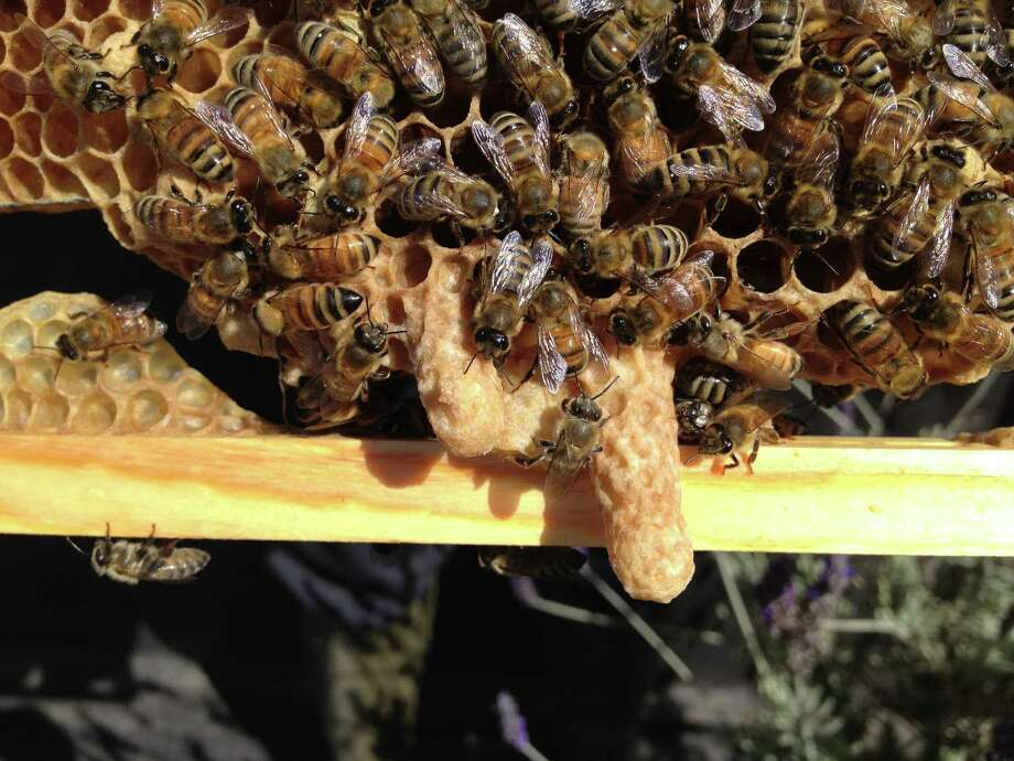 LinkedIn is a hive of bees -- it's all about work. Photo: Deb Wandell