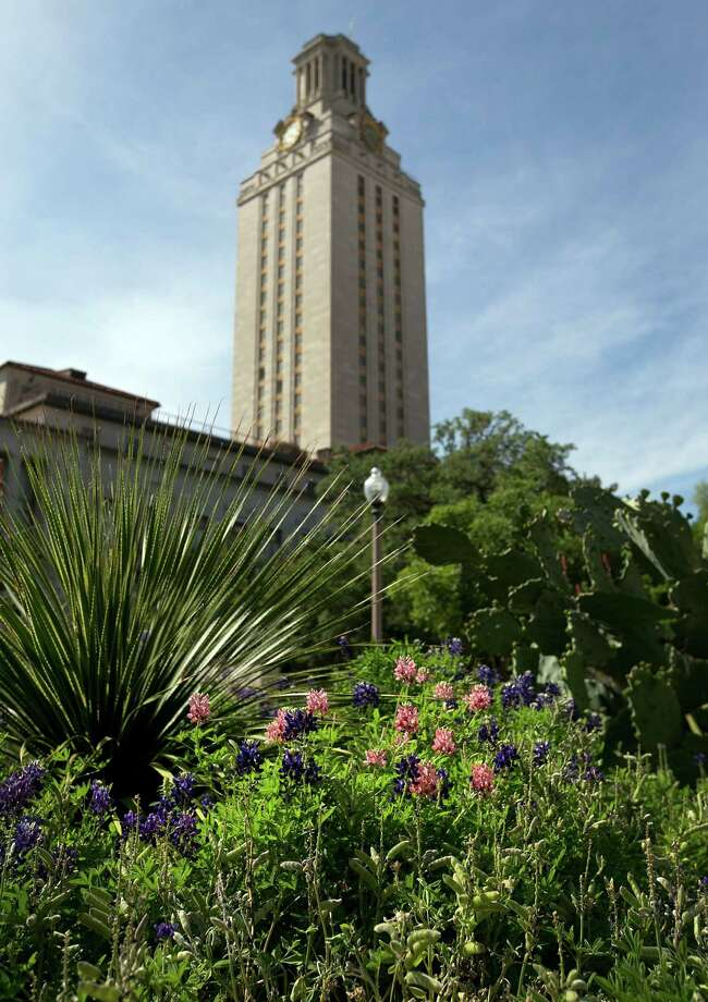 Speculation is growing about some Aggie-maroon bluebonnets blooming near the University of Texas Tower. Photo: Dborah Cannon / American-Statesman