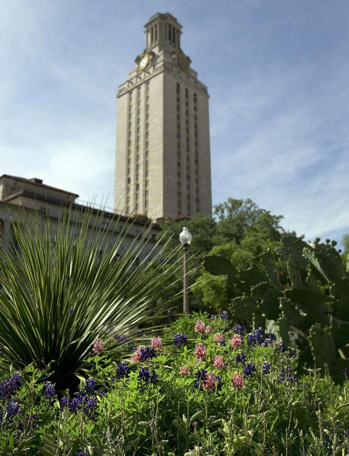 Bluebonnets with a maroon hue grow in flower beds near the University of Texas Tower in Austin. Many wonder if the flowers were planted as a prank by Texas A&M fans. Photo: Deborah Cannon / Austin American-Statesman / American-Statesman