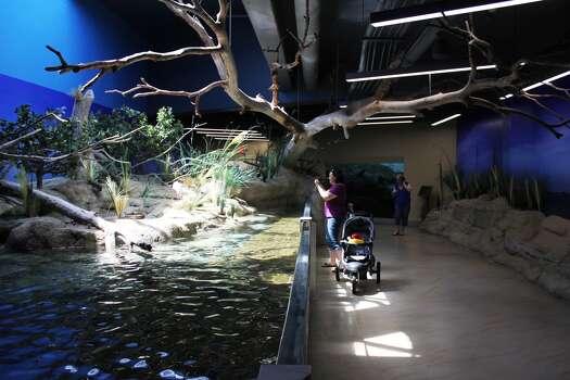 Texas State Aquarium to get $50 million makeover - San ...