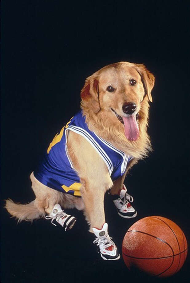 "Buddy was also the star of the Disney movie ""Air Bud"" and its sequel. Buddy sadly succumbed to cancer in the late-'90s. Photo: Getty"
