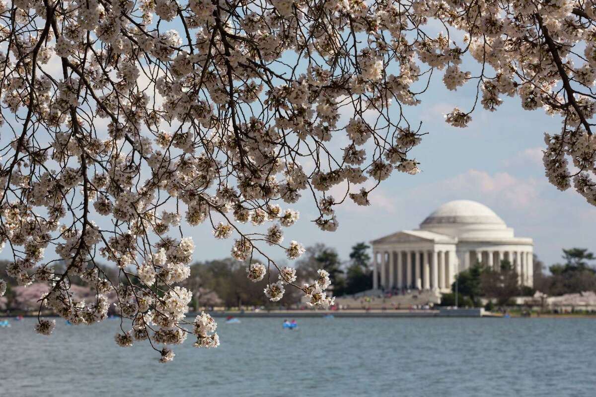 WASHINGTON, DC - APRIL 9: Cherry blossoms bloom across from the Jefferson Memorial along the Tidal Basin April 9, 2014 in Washington, DC. (Photo by Drew Angerer/Getty Images) ORG XMIT: 484042515