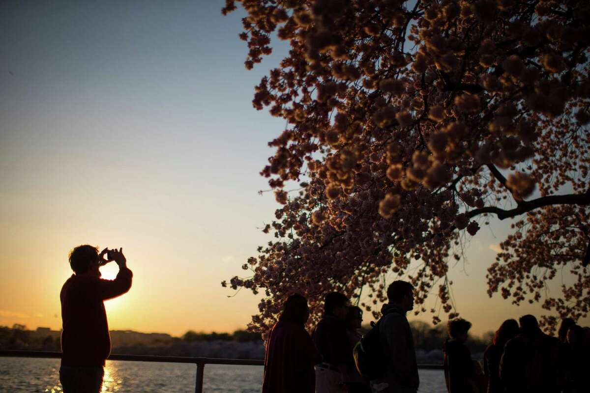Visitors to the Tidal Basin view the cherry blossom trees as they begin to bloom, on Wednesday, April 9, 2014, in Washington. (AP Photo/ Evan Vucci) ORG XMIT: DCEV106