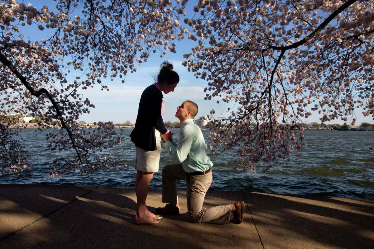 With the Jefferson Memorial in the background, Steven Paska, 26, right, of Arlington, Va., kneels as he asks Jessica Deegan, 27, his girlfriend of two years, to marry him, near cherry blossom trees in peak bloom along the tidal basin in Washington, Thursday, April 10, 2014. Deegan said yes to the surprise proposal. (AP Photo/Jacquelyn Martin) ORG XMIT: DCJM108