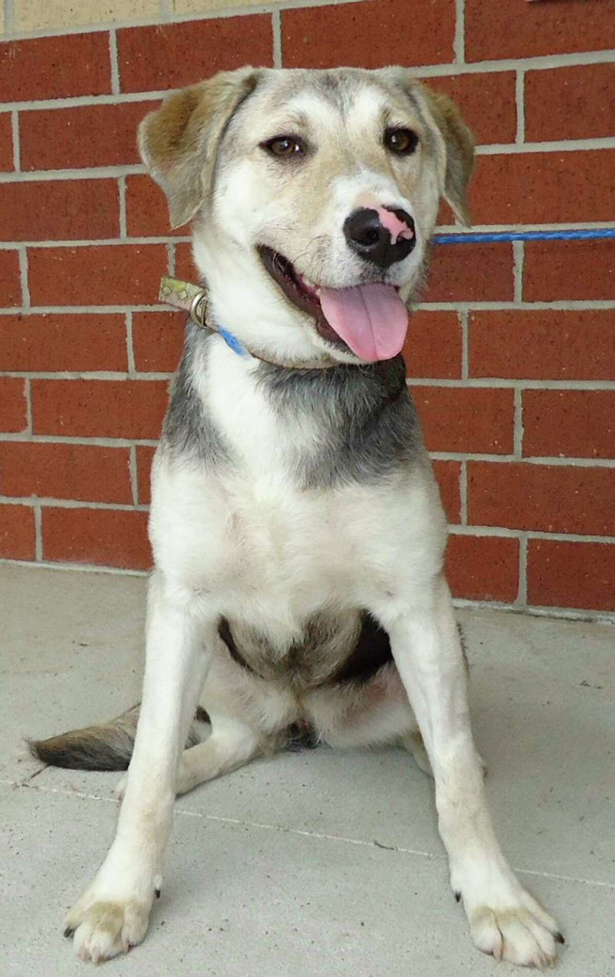 Amy, a 10 month old German Shepherd / mix girlfriend. She came to CAP as a stray