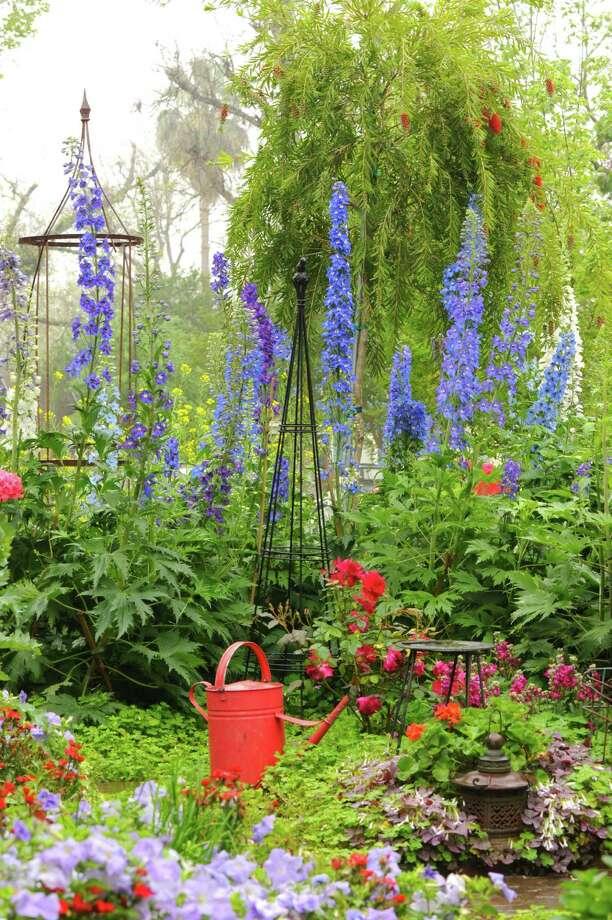 Stunning delphiniums create vertical drama in Terry Gordon Smith's garden.