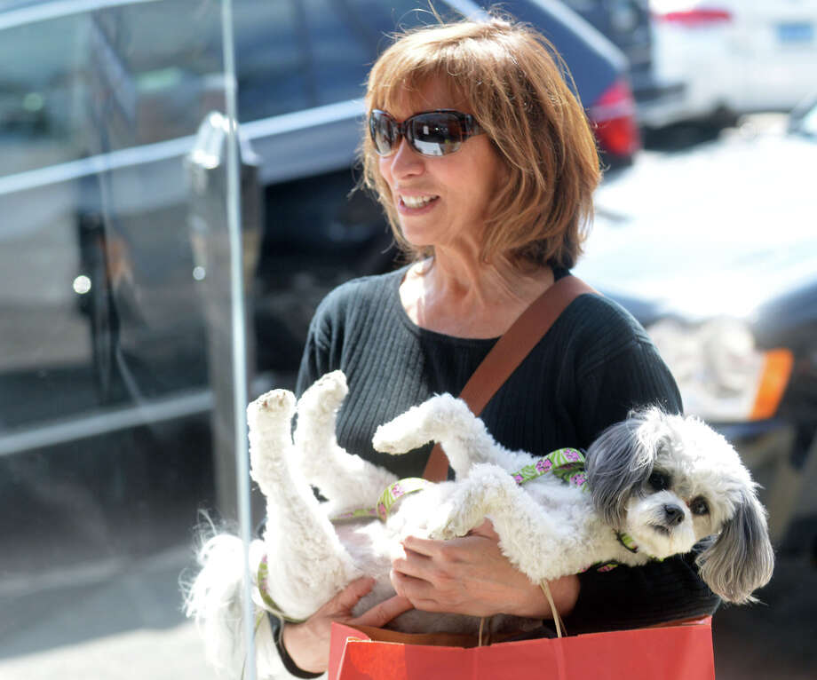 "Joy Mindlin of Stamford craddles her Maltipoo, Fiona, while window shopping on Greenwich Avenue in Greenwich, Conn., Friday afternoon, April 11, 2014. Mindlin said that one of her favorite activities is shopping with Fiona on the Avenue, ""Greenwich is such a dog friendly town,"" said Mindlin. Life for Fiona is not always as cushy as getting a carried while out shopping as Mindlin said Fiona is a therapy dog and works at area hospitals and with children. Photo: Bob Luckey / Greenwich Time"