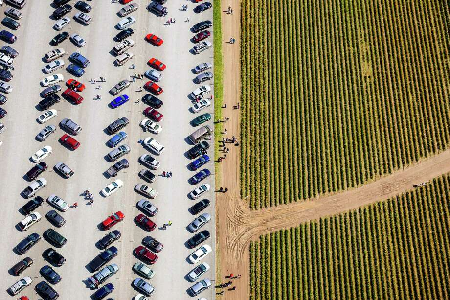 Stripes of color mimic the lines of the public's vehicles at the annual Skagit Valley Tulip Festival from above Friday, April 11, 2014. Aerial access courtesy of HeliTours Seattle and Classic Helicopters. Photo: JORDAN STEAD, SEATTLEPI.COM / SEATTLEPI.COM