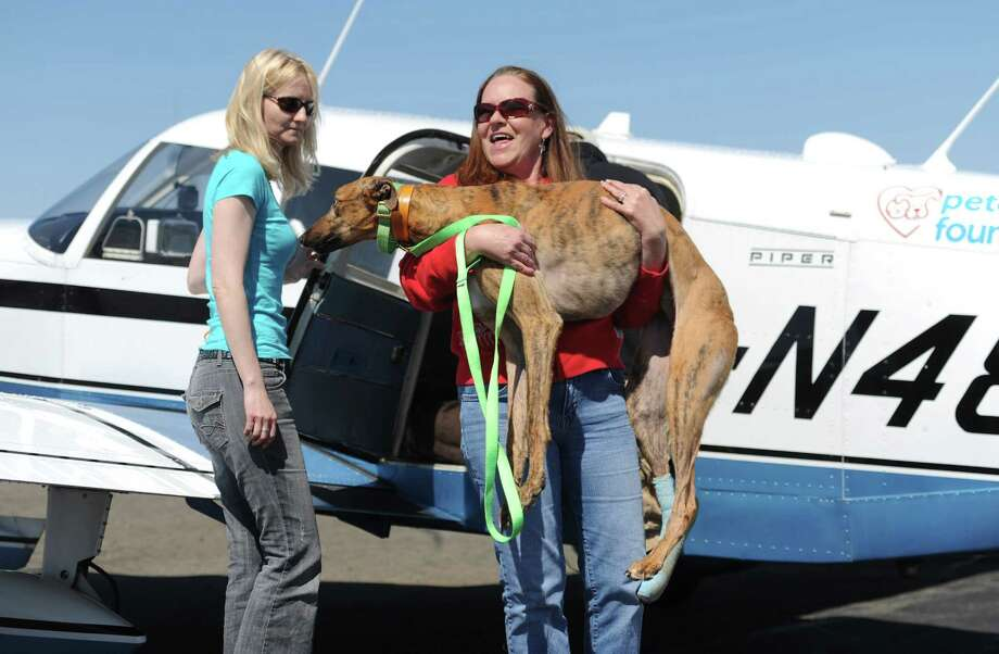 Greyhound Rescue & Rehab Founder Christine Johnson carries Gunner, an injured greyhound, off the plane with one other injured greyhound and two racing greyhound dogs after arriving at Danbury Airport in Danbury, Conn. Saturday, April 12, 2014.  The Brave Tide Foundation flew the dogs in from West Virginia to Greyhound Rescue & Rehabilitation in Cross River, N.Y., which is providing medical care for the two injured dogs that would have otherwise been euthanized. Photo: Tyler Sizemore / The News-Times