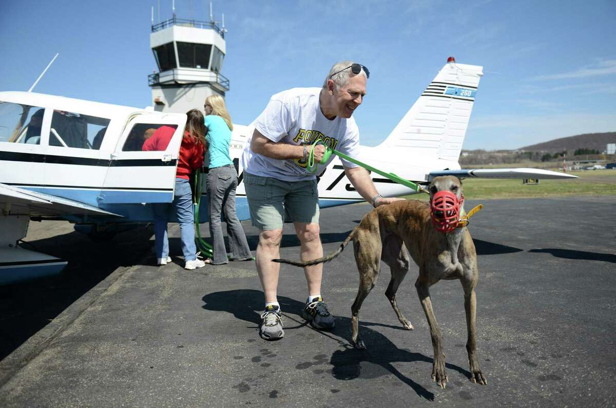 Geoff Harrington, of Ridgefield, walks Rift, a greyhound dog, off the plane with one other racing greyhound and two injured greyhound dogs at Danbury Airport in Danbury, Conn. Saturday, April 12, 2014. The Brave Tide Foundation flew the dogs in from West Virginia to Greyhound Rescue & Rehabilitation in Cross River, N.Y., which is providing medical care for the two injured dogs that would have otherwise been euthanized.