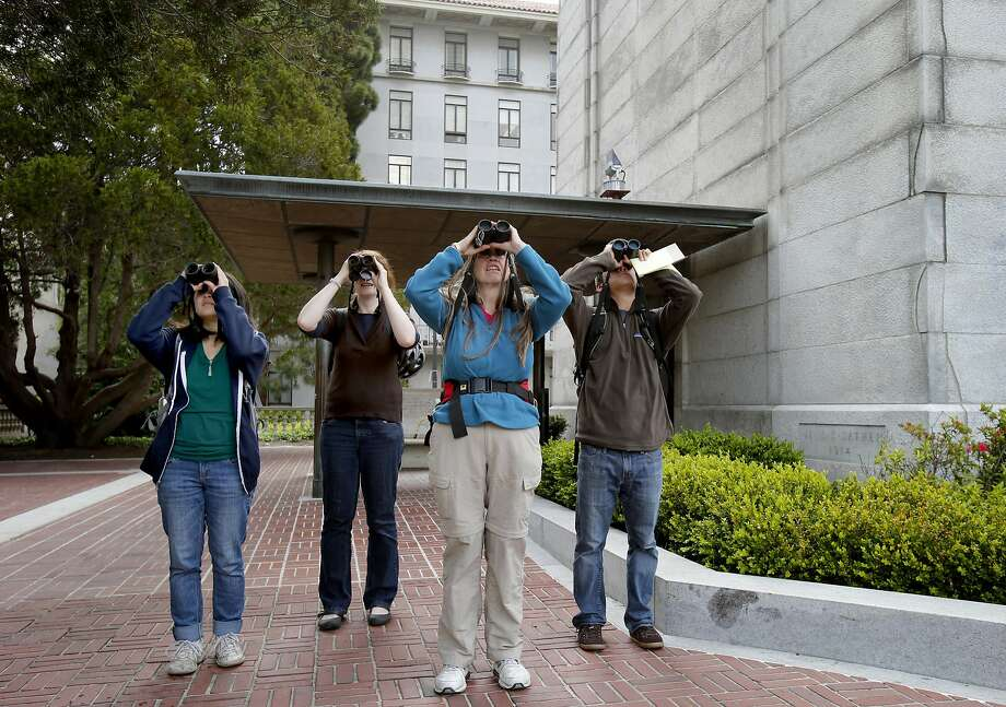 Just beneath the Campanile on the UC Berkeley campus, the competition heats up as the team of bird spotters labors to rack up more species for the count. Photo: Brant Ward, The Chronicle