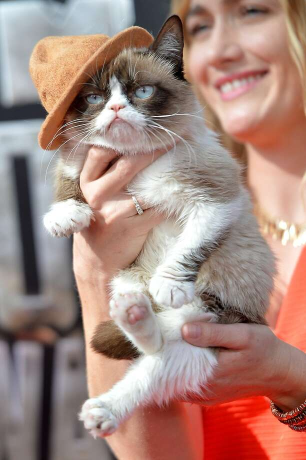 Grumpy Cat attends the 2014 MTV Movie Awards at Nokia Theatre L.A. Live on April 13, 2014 in Los Angeles, California. Photo: Michael Buckner, Getty Images