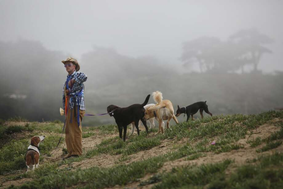 Wild Bill Peacock walks his clients dogs at Fort Funston on the edge of San Francisco, Calif. Photo: Mike Kepka , The Chronicle